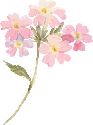 水彩イラストピンクの花