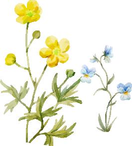 水彩イラスト黄色と水色の花
