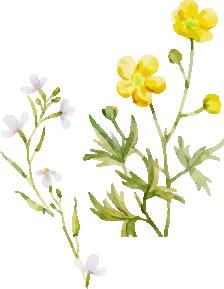水彩イラスト黄色の花